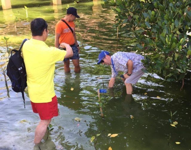 Mangrove planting Boracay