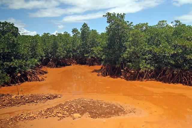 orange stained mangrove area Carrascal
