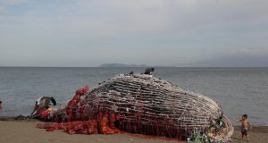 Beached whale art installation