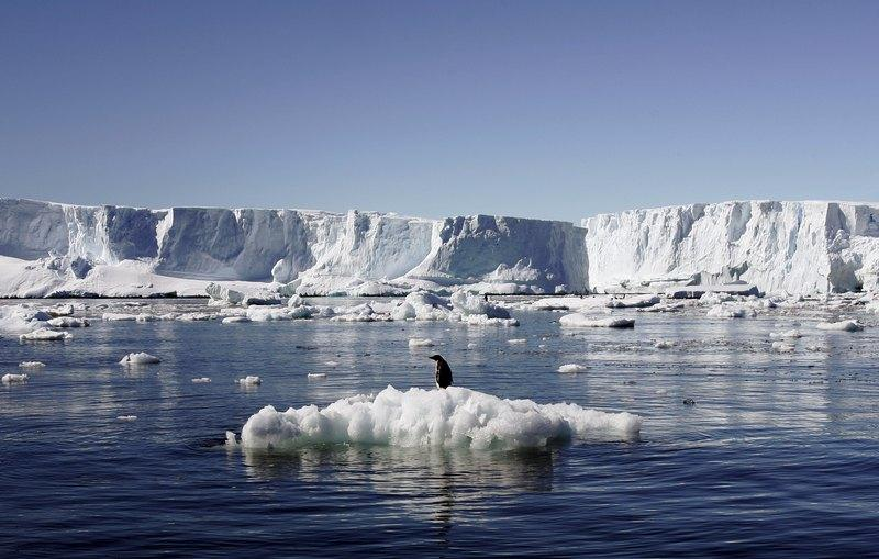 File photo shows an Adelie penguin standing atop a block of melting ice near the French station at Dumont díUrville in East Antarctica