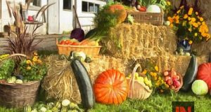 farm produce display