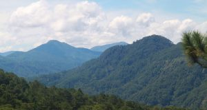 Cordillera forested mountain
