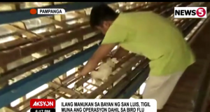 poultry farm Pampanga bird flu