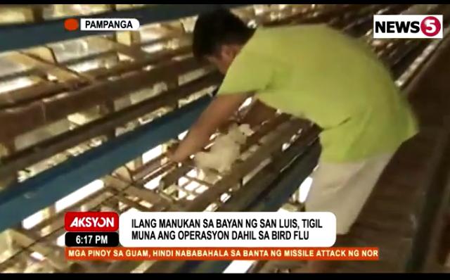 poultry farm Pampanga bird flu