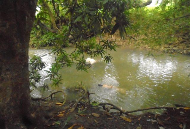 Reynaldo de Guzman on creek