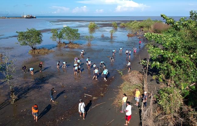 Bgy Lumbocan mangrove planting