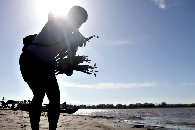 Mangrove seedlings planting Butuan