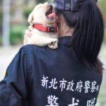 Taiwan K9 puppies