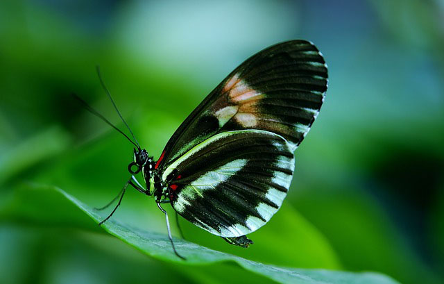 Why do we believe that butterflies are the souls of dead relatives?