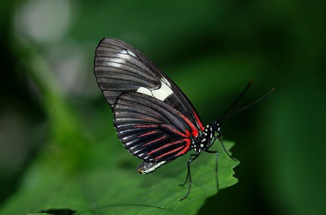 Why do we believe that butterflies are the souls of dead
