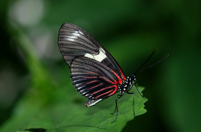 Why do we believe that butterflies are the souls of dead relatives