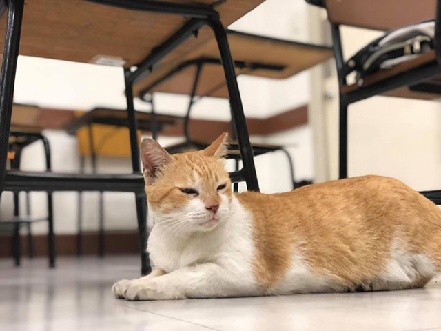 archer, DLSU's grad ceremony for a cat is adorably extra
