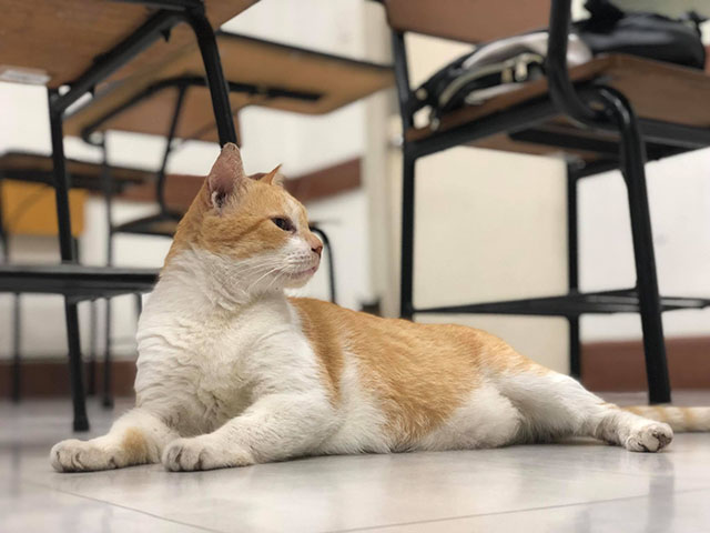 DLSU cats given purr-sonal quiet space ahead of major