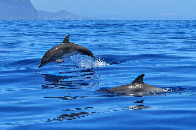 554994ce8fd1 Huge pod of dolphins seen in Oriental Mindoro shows rich marine ...