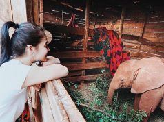 Anne Curtis' elephant