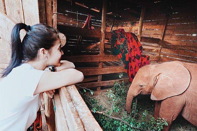 Anne Curtis' elephant