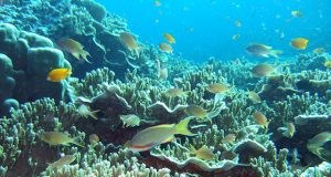 Moalboal in underwater