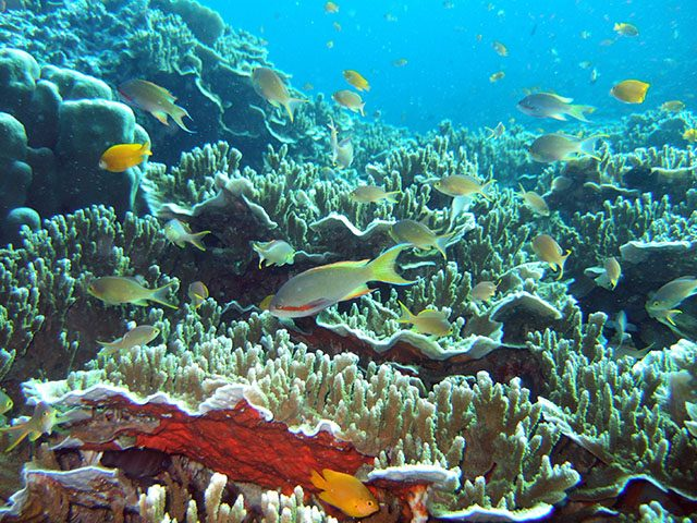 Moalboal in underwater