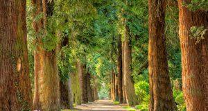 Forest Trees Interaksyon