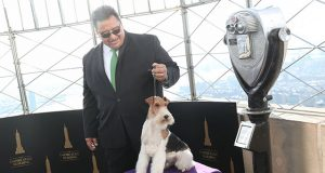 "A Wire Fox Terrier ""King"" winner of the Best in Show group at the 143rd Westminster Kennel Club Dog Show poses with its handler Gabriel Rangel on the observation deck of the Empire State Building in New York"
