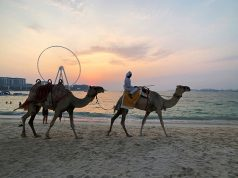 Camels walk on the beach at Jumeirah Beach Residence in Dubai