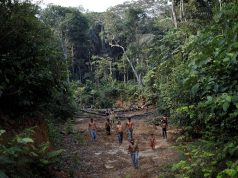 Indigenous people from the Mura tribe shows a deforested area in ??unmarked indigenous lands inside the Amazon rainforest near Humaita