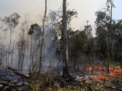 A fire burns a tract of the Amazon jungle in the city of Uniao do Sul