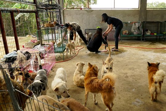 Volunteers at a makeshift shelter help dogs rescued from the exclusion zone surrounding Taal Volcano in Nasugbu
