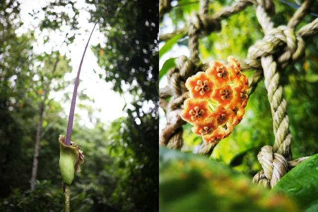 In bloom: Rare flowers blossom in Rizal amid pandemic