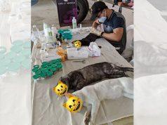 Cats of Manila