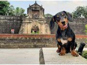 Dog in Fort Santiago